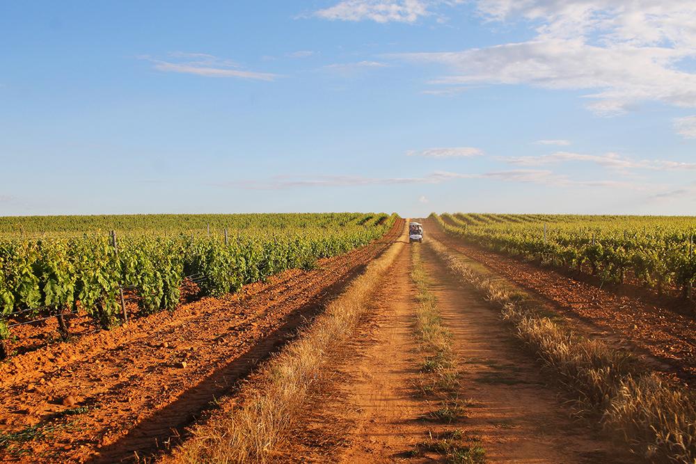 VAKRE VINRANKER: Vingården Pardevalles er verdt et besøk. God vin og nydelig landskap. Foto: Tenk Koffert