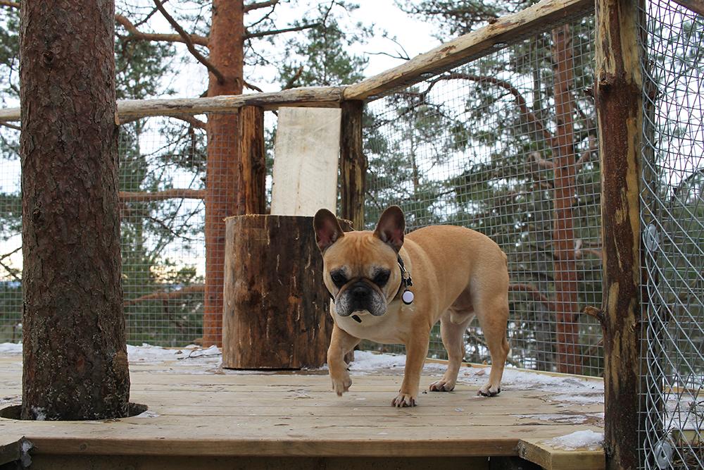 SNOOPY: Det er så koselig å ha med seg hunden på reise! Foto: Tenk Koffert