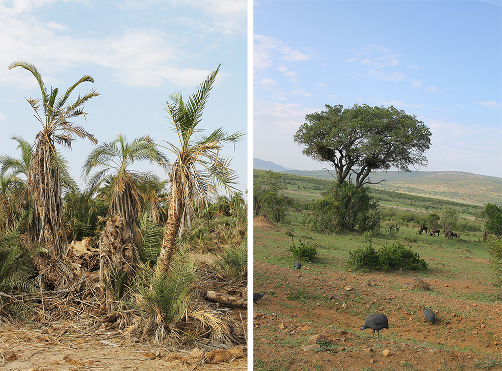 SAFARI I KENYA: På bildet til venstre ser du den første løven vi så. Flere skulle det bli! På bildet til venstre har jeg fotografert noen snåle fugler og litt av den fantastiske naturen. Har du sett, for et landskap!? Foto: Tenk Koffert