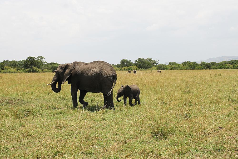 ELEFANTER: Som mor, så barn. Foto: Tenk Koffert
