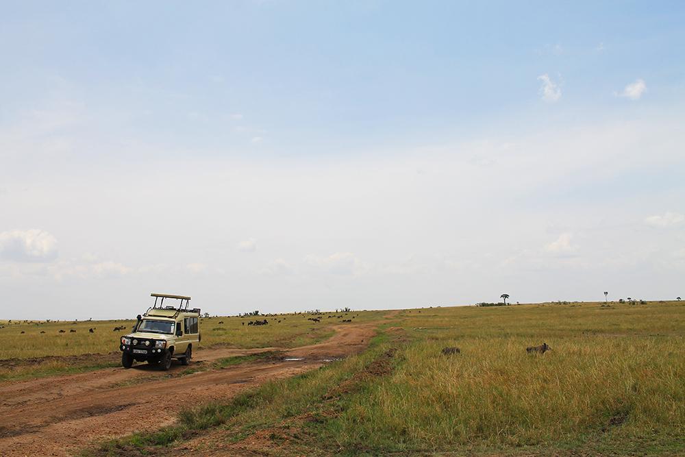 SAFARI: Vil anbefale å velge en safaribil som det ikke er plass til altfor mange i. Jeg husker jeg så en del minibusser fullstappet med folk. De må ha hatt vanskeligheter for å ta bilder. Safaribiler som denne på bildet for eksempel, er heller å foretrekke. Foto: Tenk Koffert
