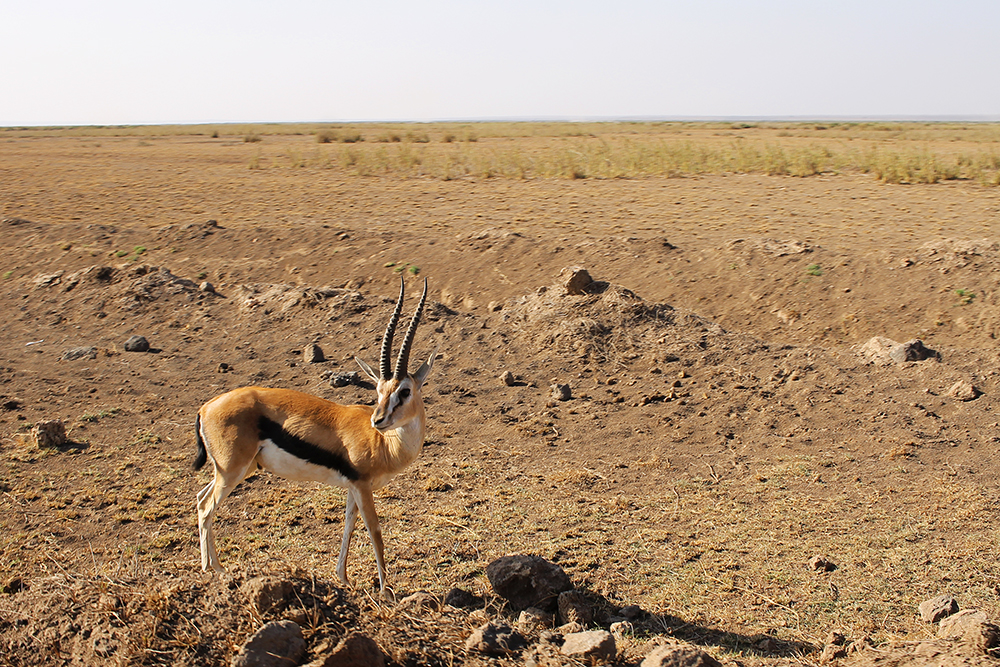 IMPALA: Den følelsen, når du har øyekontakt med en antilope. 😍 Foto: Tenk Koffert