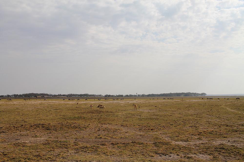 AMBOSELI: Sletter som dette så vi hele veien. På sletta lever masse forskjellige dyr sammen i harmoni, zebra, gnu, antiloper, villsvin, struts og hyener, for eksempel. Foto: Tenk Koffert