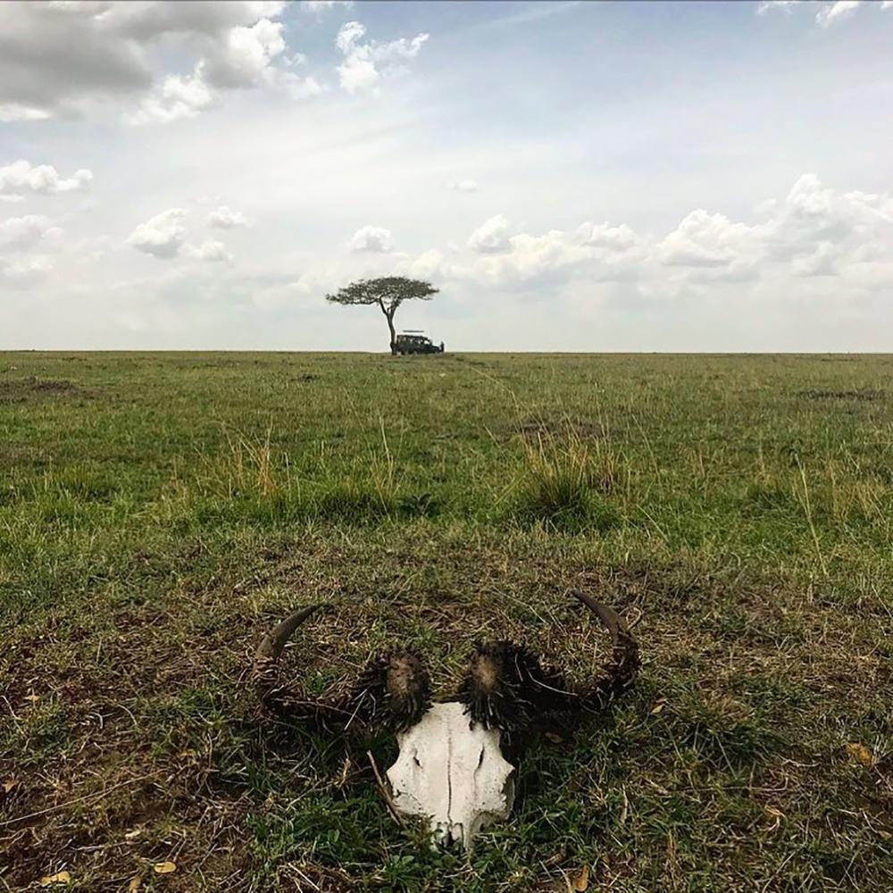 MASAI MARA: Når du midt i løvenes rike, Masai Mara, bare skal løpe bort til nærmeste tre for en liten tissepause, og innser at du er litt vel langt unna safaribilen… Bare du og en dau bøffel. 🤣 Foto: Tenk Koffert