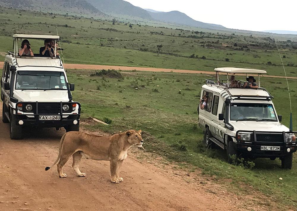 SAFARI I MASAI MARA: Det føles helt spektakulært å være så nært disse ville, vakre dyrene. Foto: Tenk Koffert