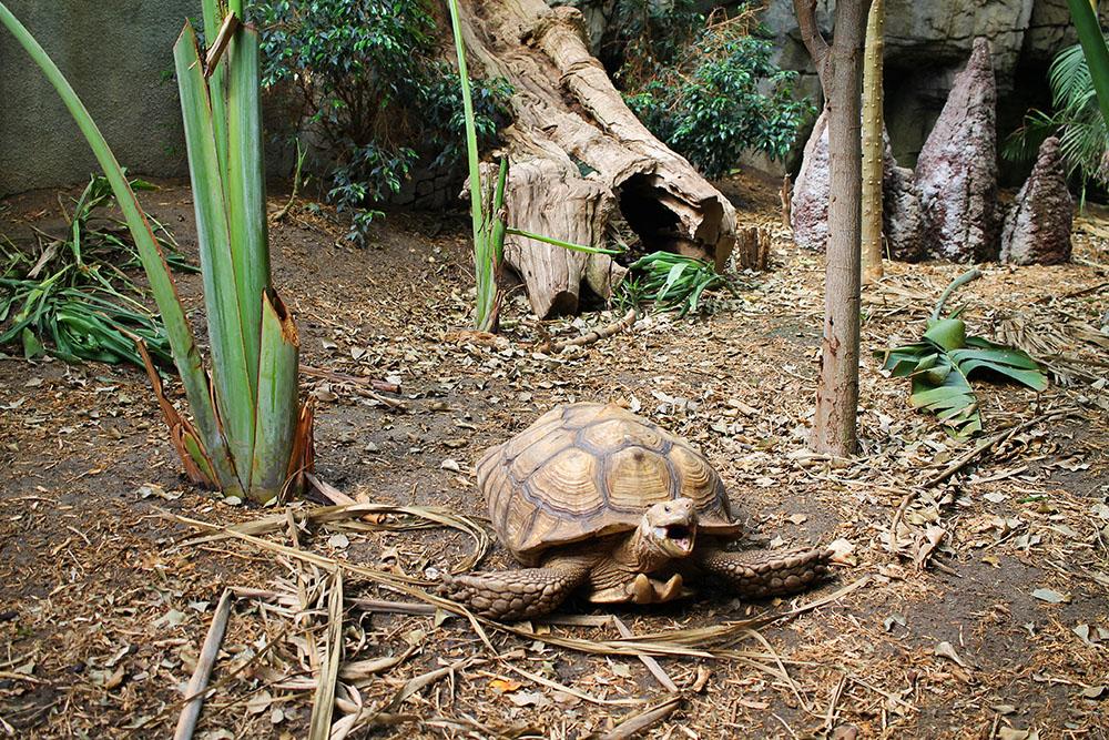 RANDERS REGNSKOV: I denne parken får du nærkontakt med dyr fra mange forskjellige kontinenter. Foto: Tenk Koffert