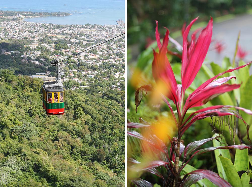ISEBEL DE TORRES I DEN DOMINIKANSKE REPUBLIKK: Ta taubanen opp til fjellet Isabel de Torres og nyt den frodige utsikten. På toppen finner du en botanisk hage med flotte, fargerike planter! Foto: Tenk Koffert