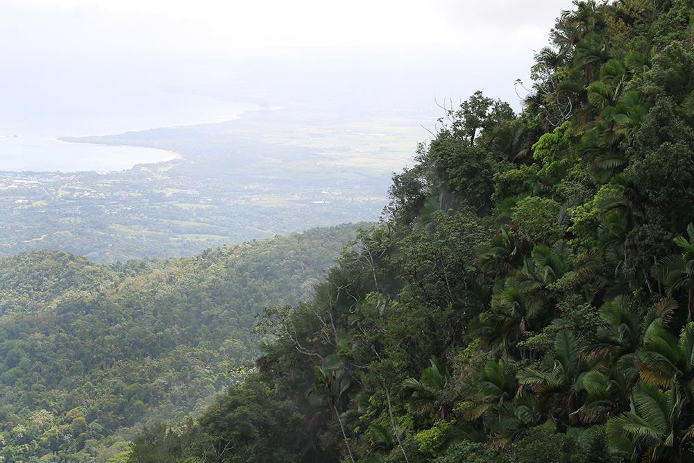 ISABEL DE TORRES: Grønn og frodig jungel oppover i fjellet, Isabel de Torres i Den dominikanske republikk. Foto: Tenk Koffert