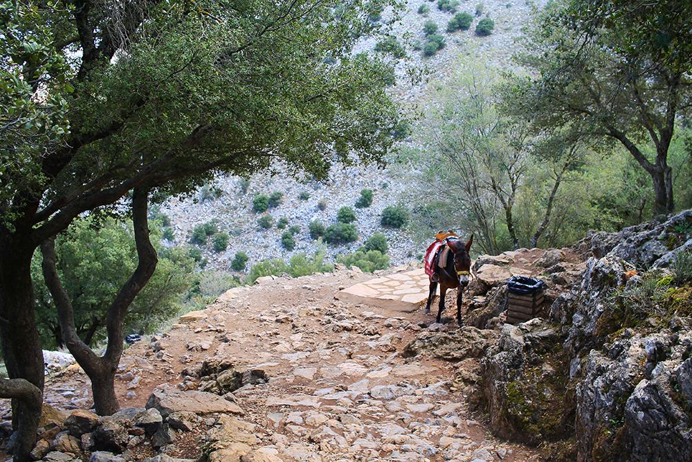 IKKE STØTT DYREPLAGERI: Flere steder på Kreta kan du betale penger for å klappe og/eller ri på esler. Disse dyrene står ute i solen hele dagen, og må drasse rundt på tunge turister dag ut og dag inn. Dette er etter min mening dyreplageri, og jeg skulle ønske alle sluttet å støtte dette. Foto: Tenk Koffert