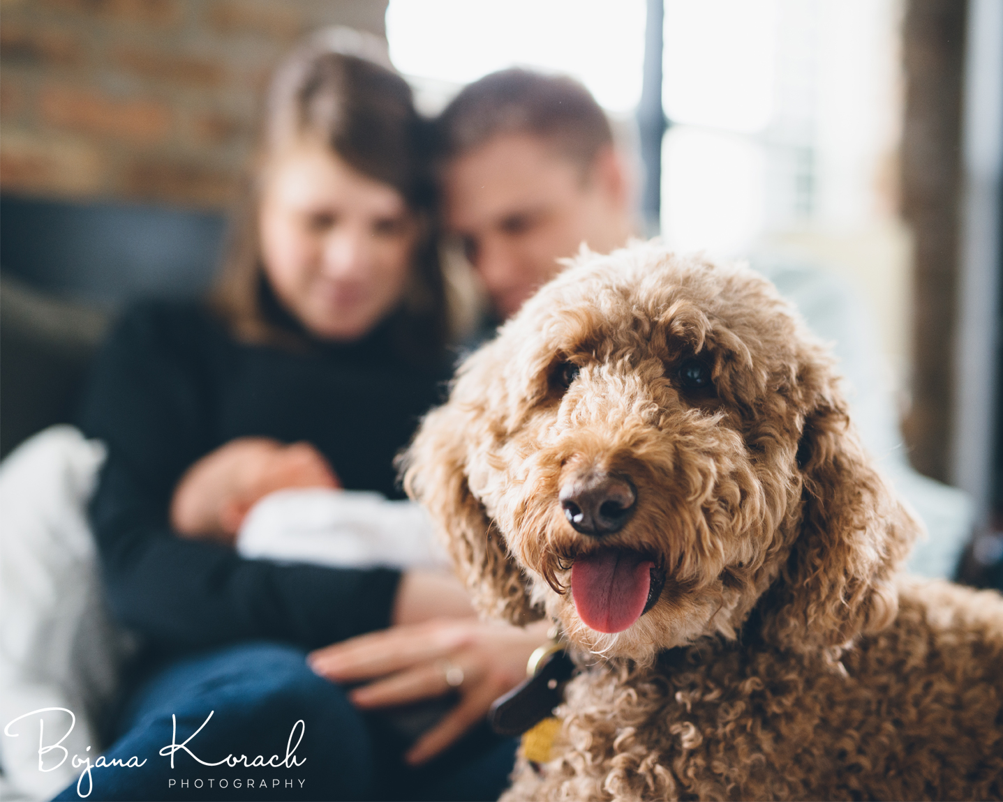 goldendoodle and baby