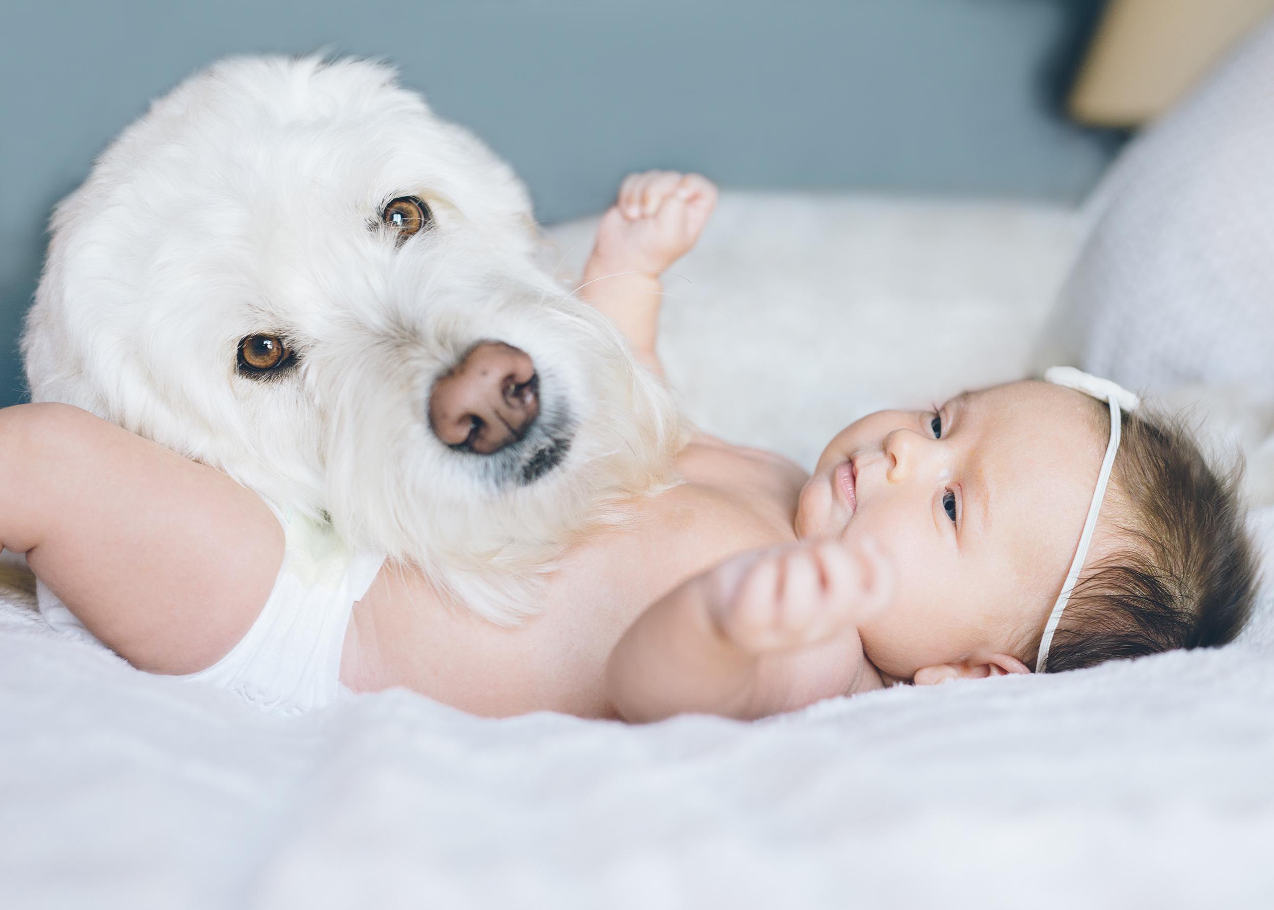 san-francisco-newborn-photographer-2.jpg