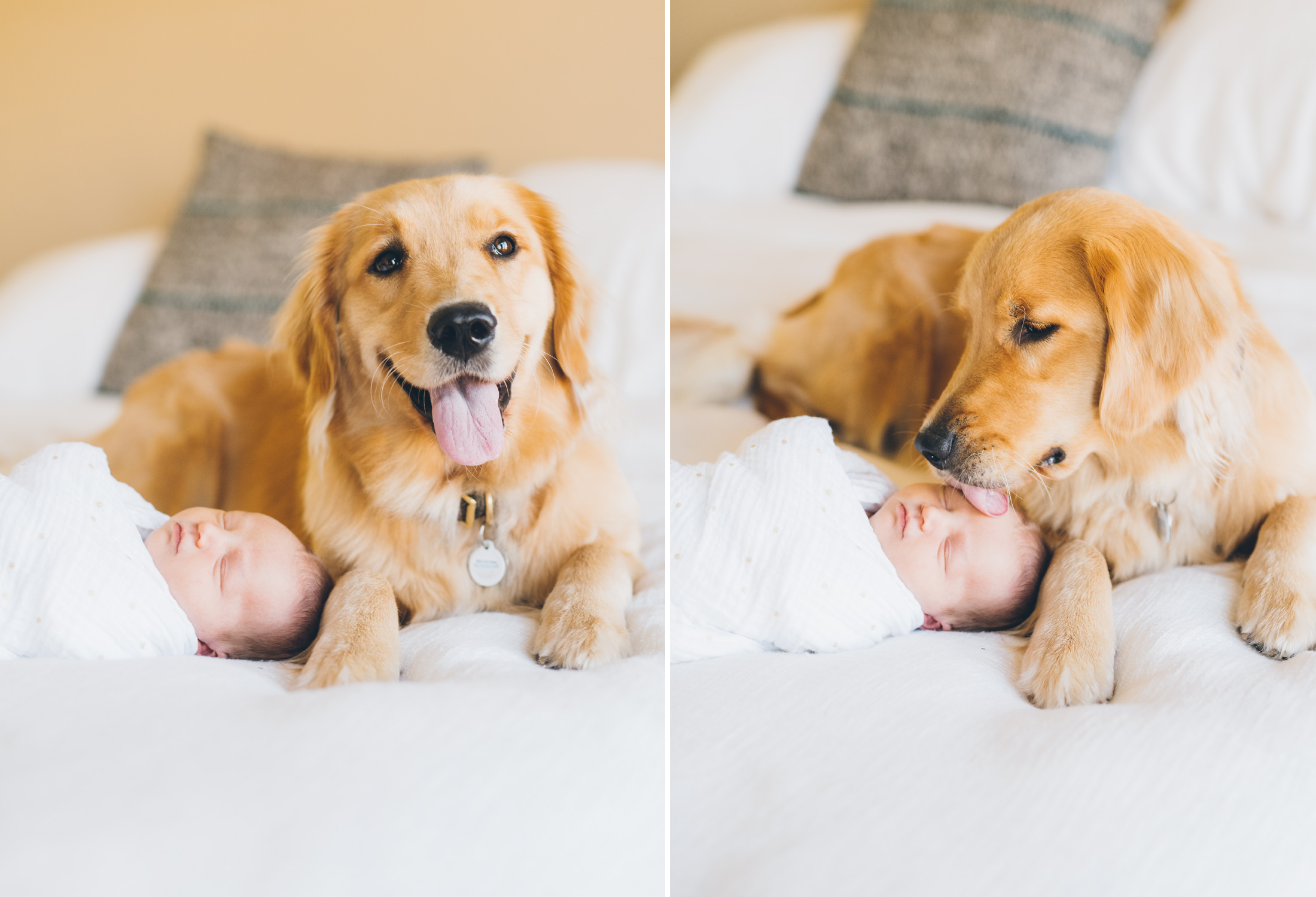 golden-retriever-puppy-with-a-newborn-baby.jpg