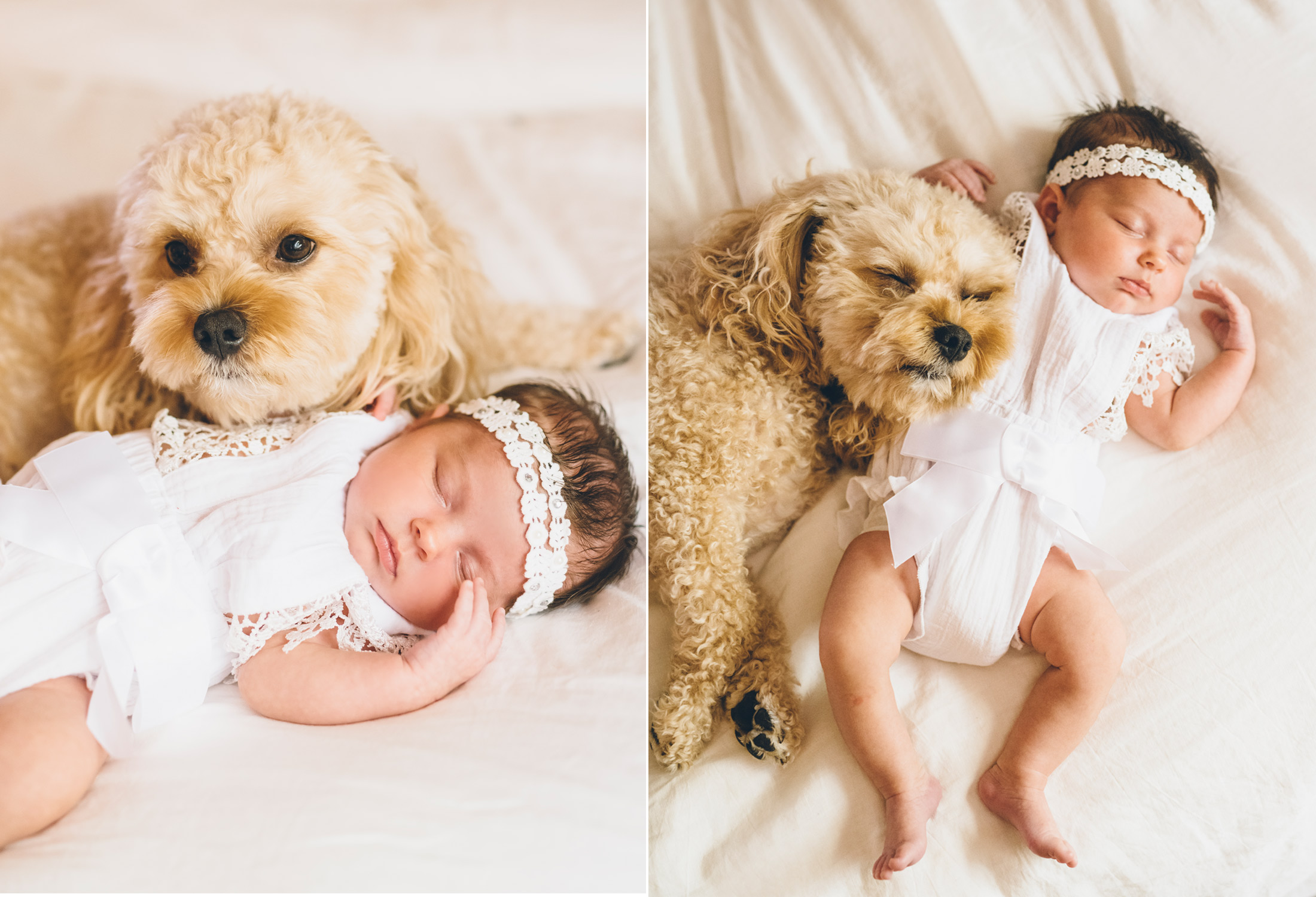 cavapoo-puppy-and-baby.jpg