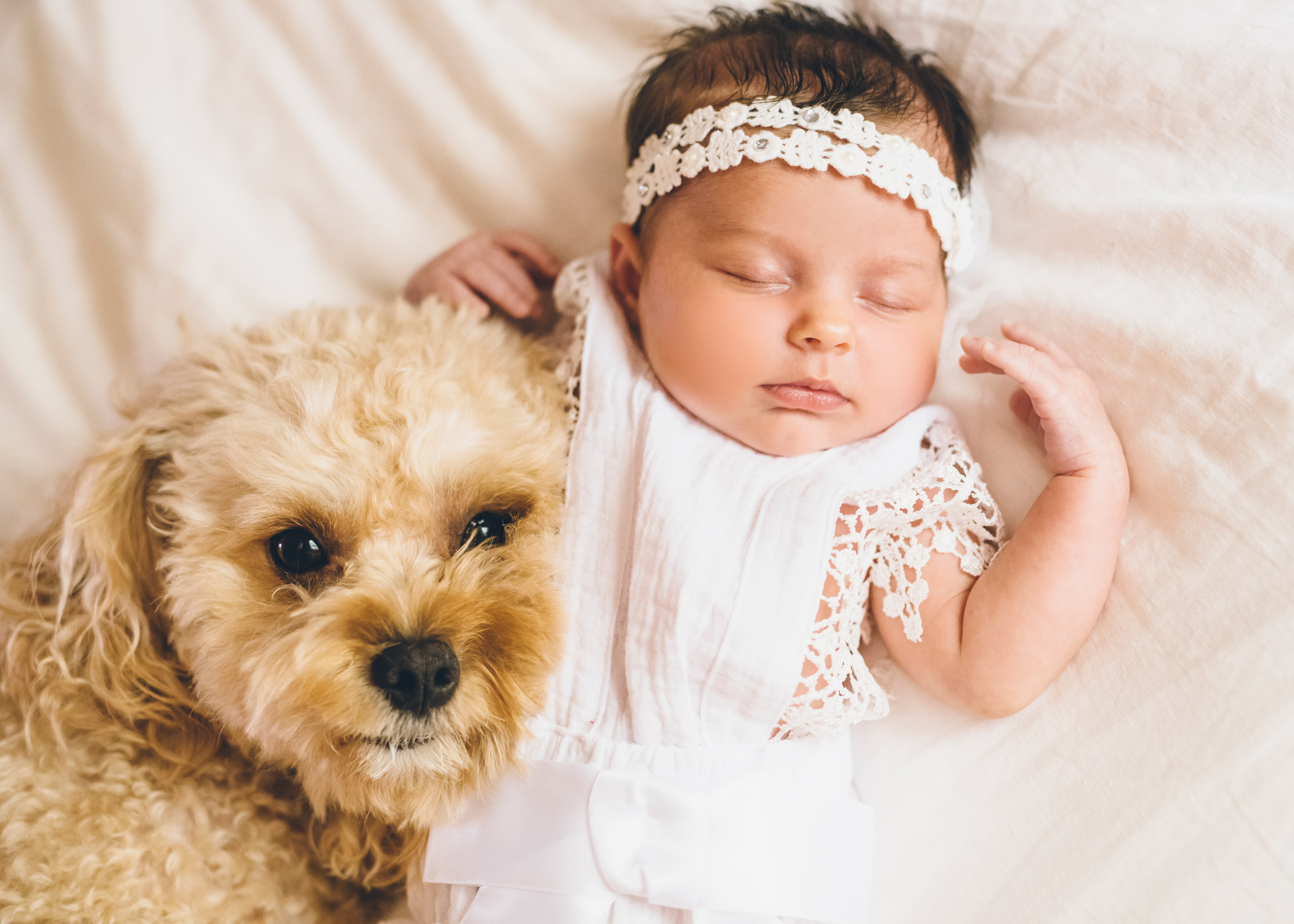 cavapoo-and-baby-2.jpg