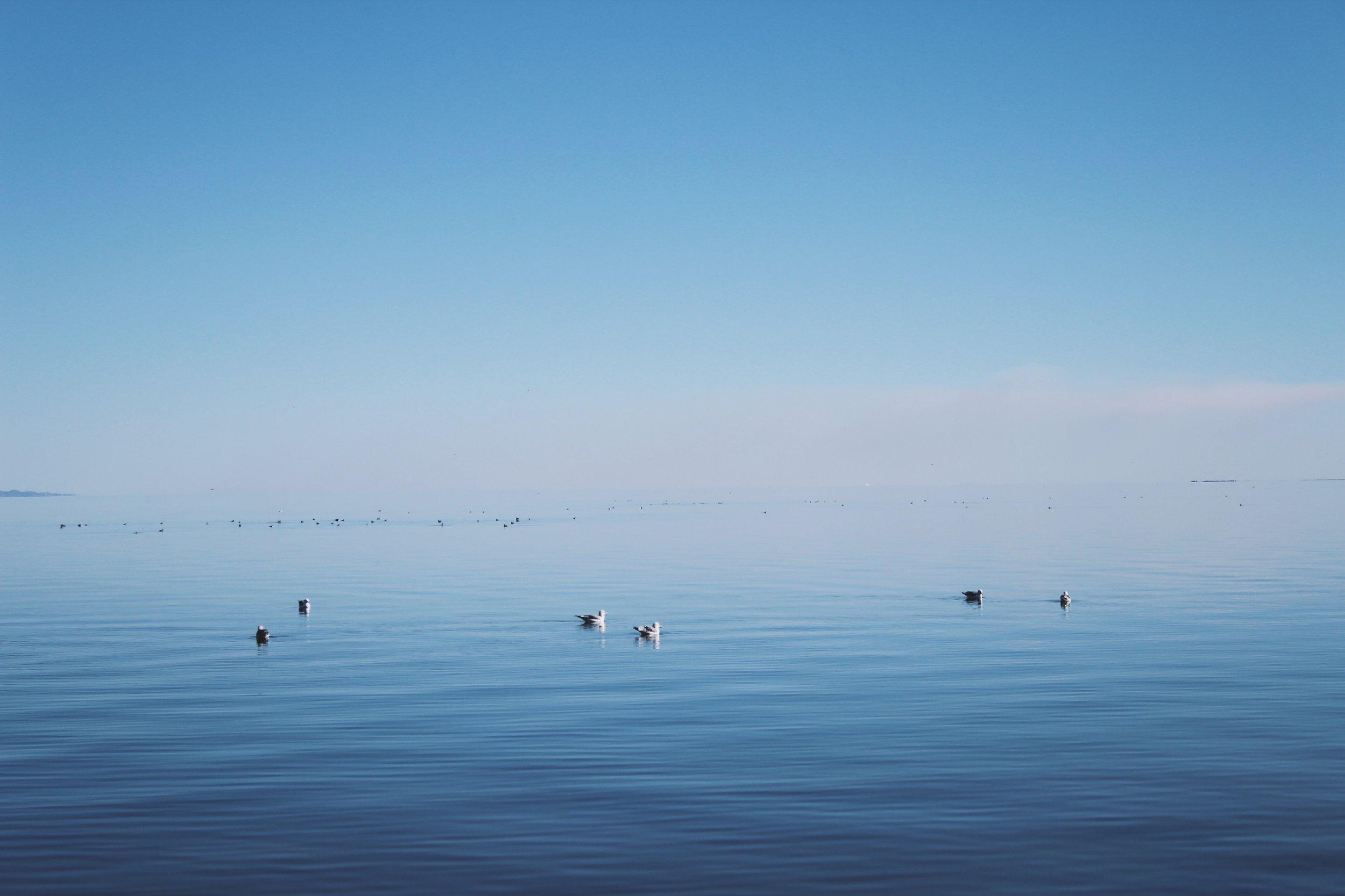 The Salton Sea - Salton City, CA.jpg