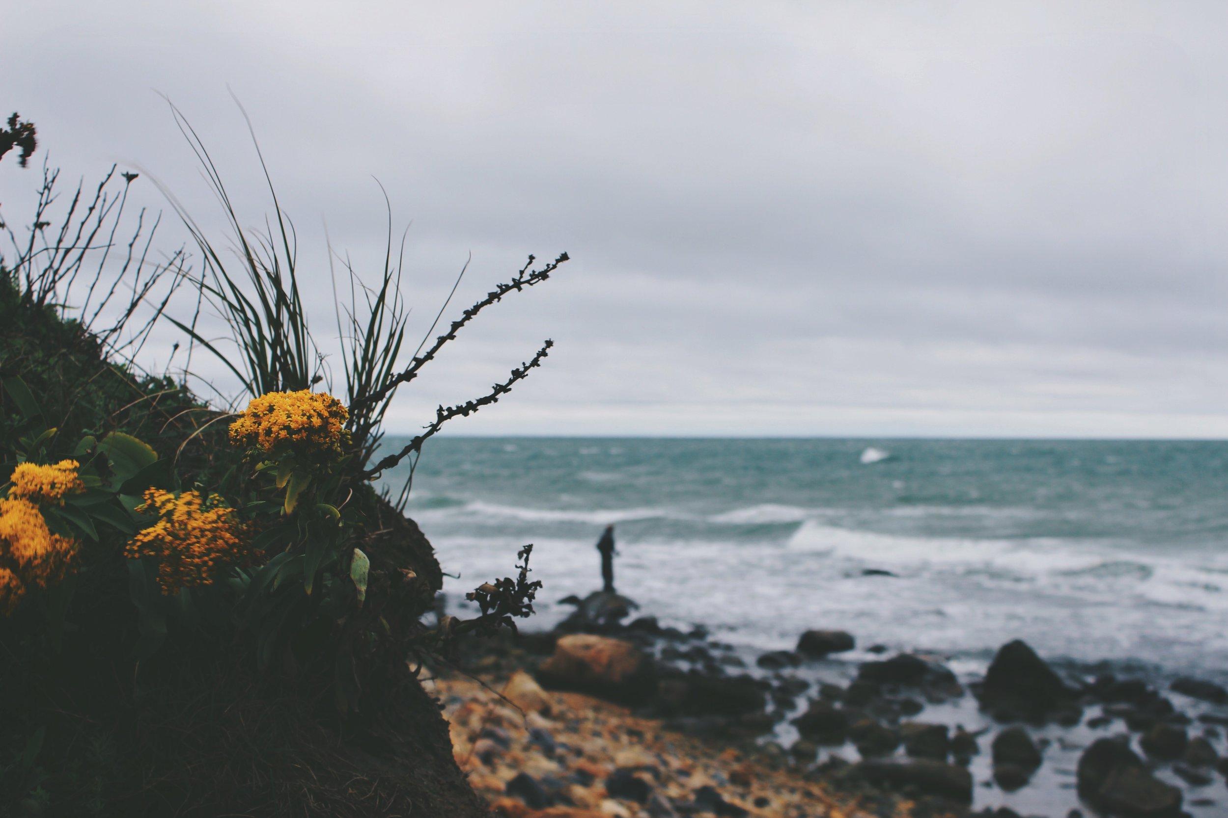 Coastal Flowers, Montauk, NY.jpg