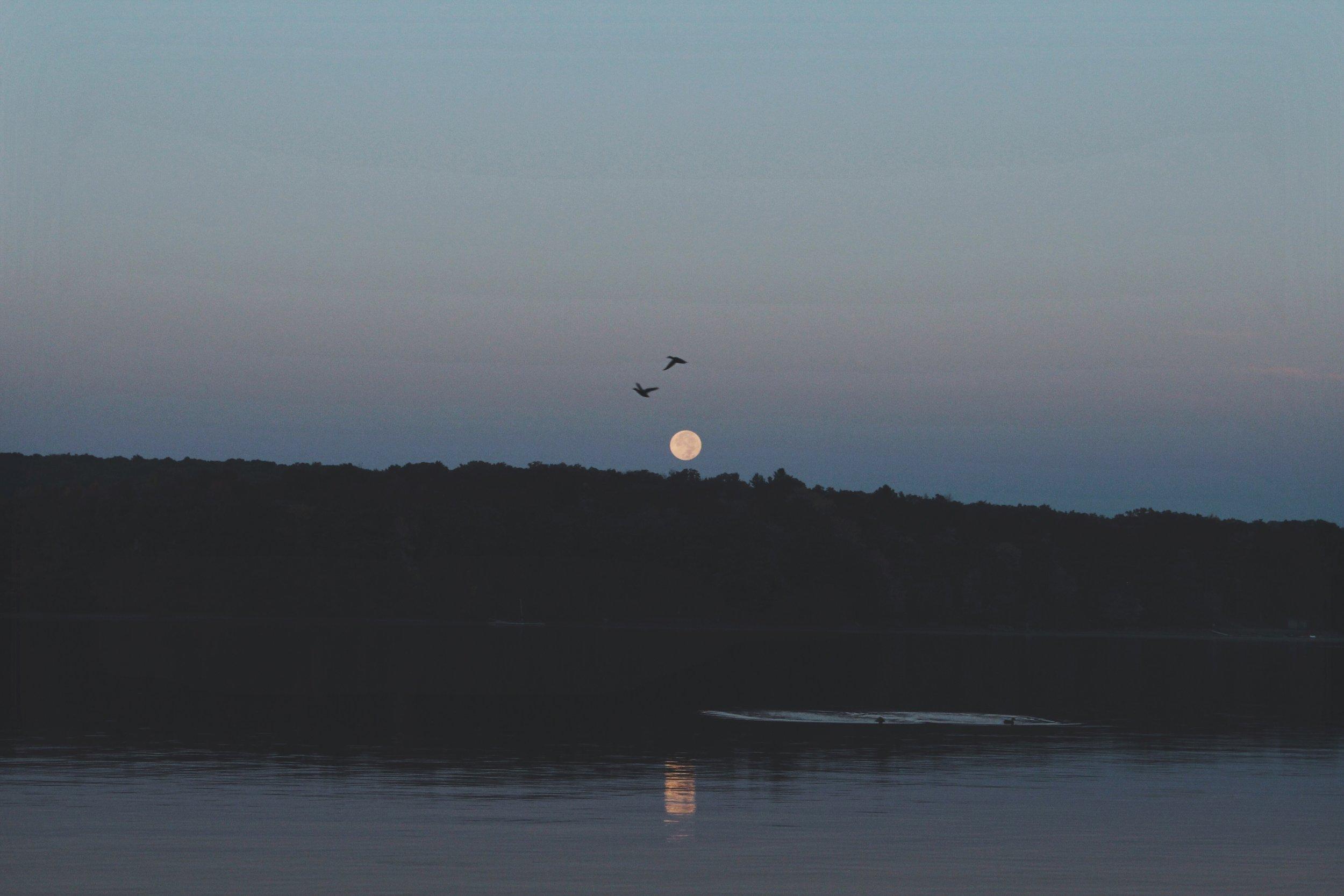 Ducks Flying Over Moonset - Western Maryland.jpg