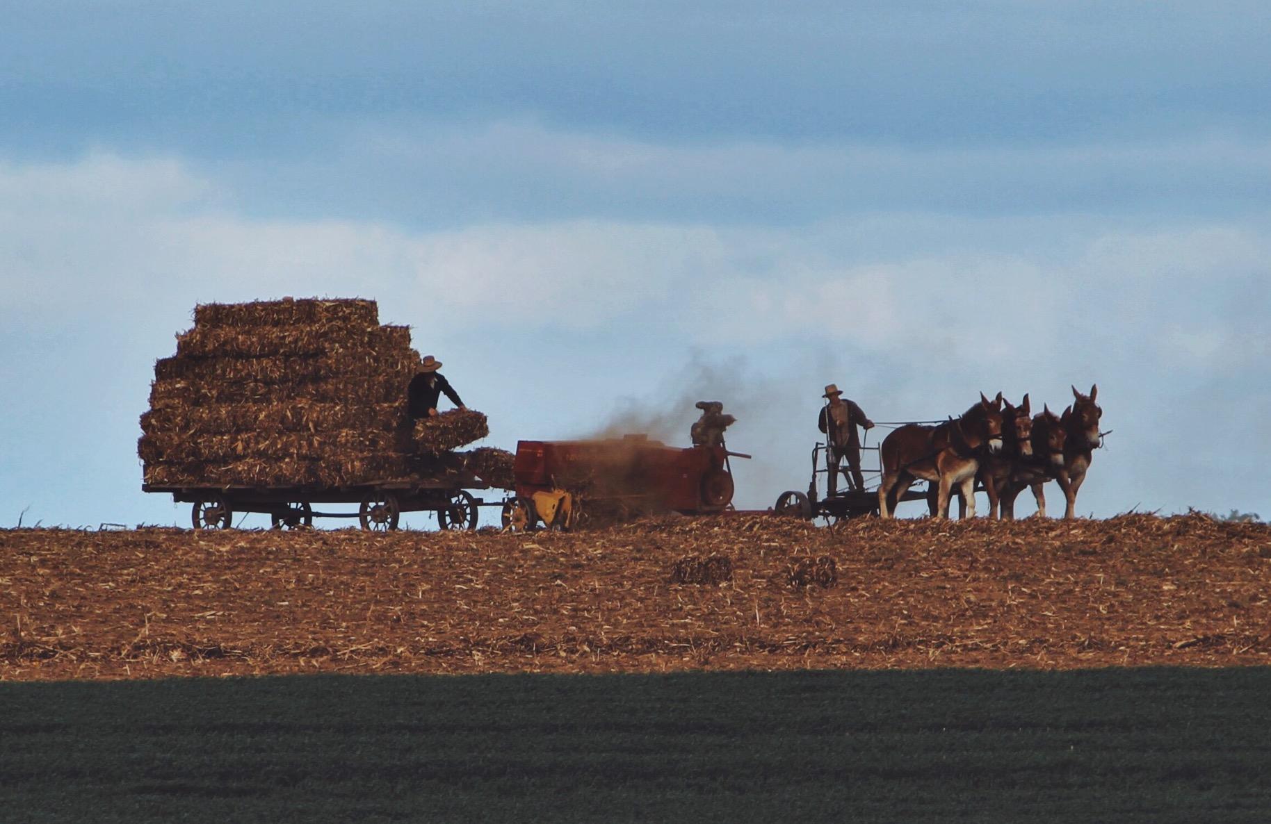 The American Farmer.jpeg