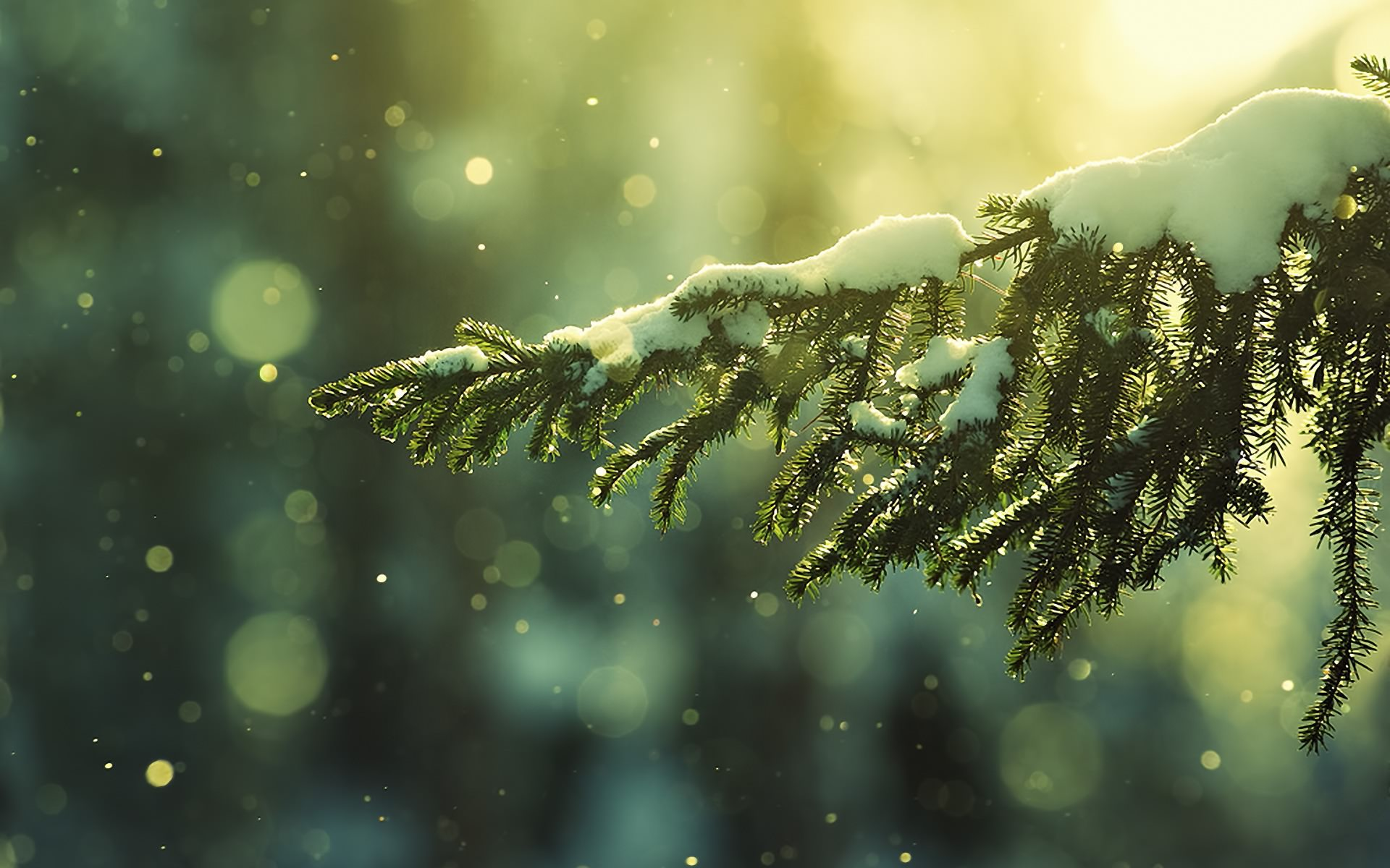 Frozen-Tree-Background.jpg