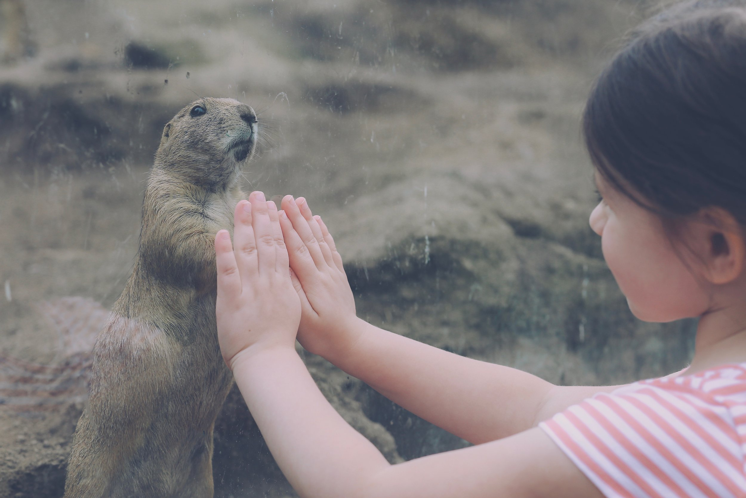 Visiting the prairie dogs at the Turtle Back Zoo in West Orange, NJ.