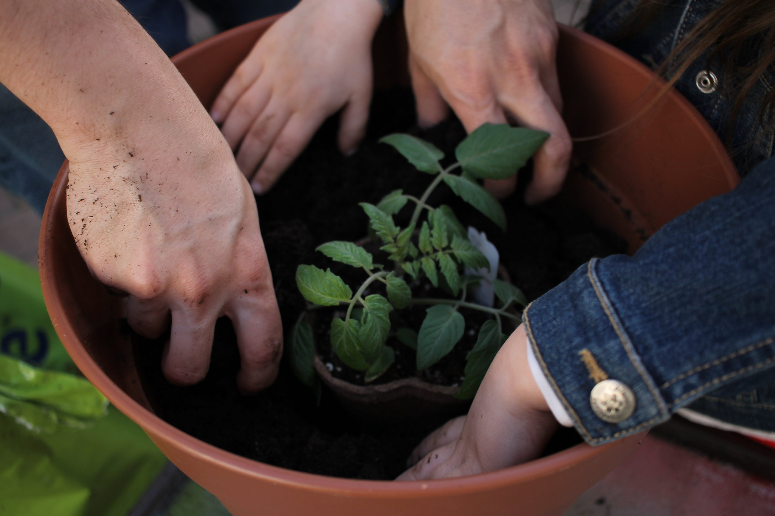 Spring gardening during an at home family photography session by Jen Grima, Allentown PA Family Photographer.
