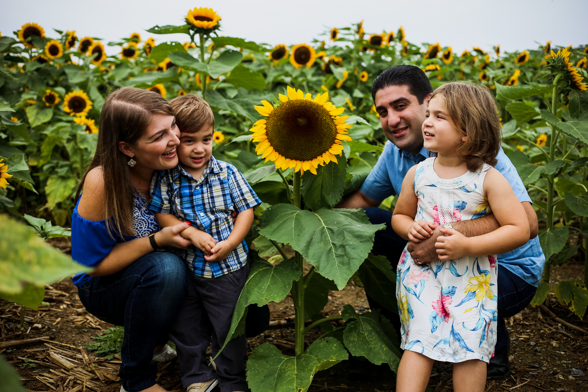 Family photography at the sunflower experience at Grim's Orchard in Breinigsville, PA.