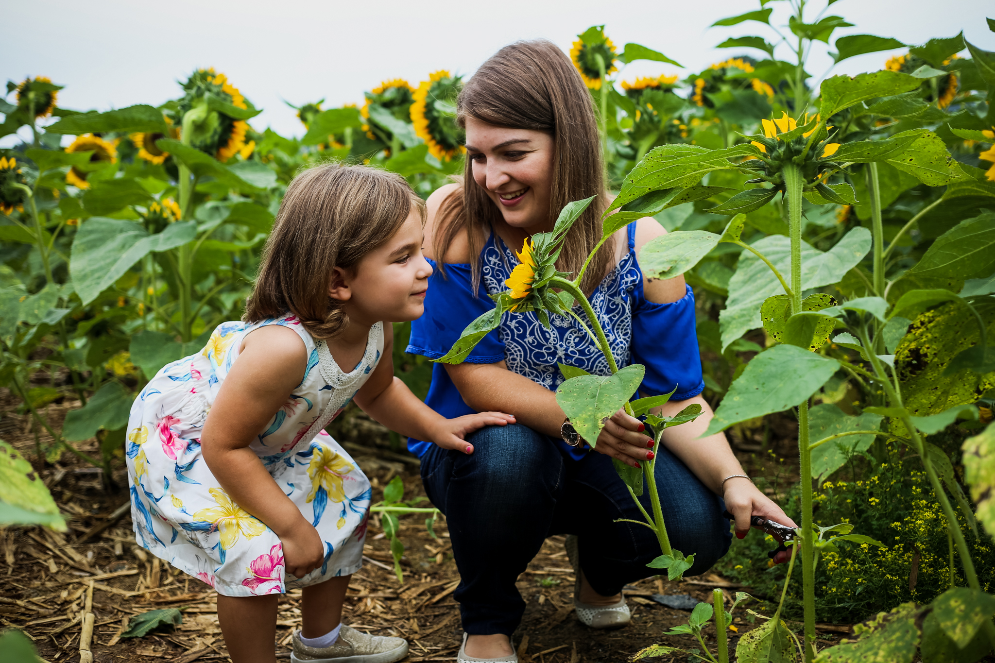 Mother and daughter in the sunflower fields at Grim's Orchard, Lehigh Valley, PA.