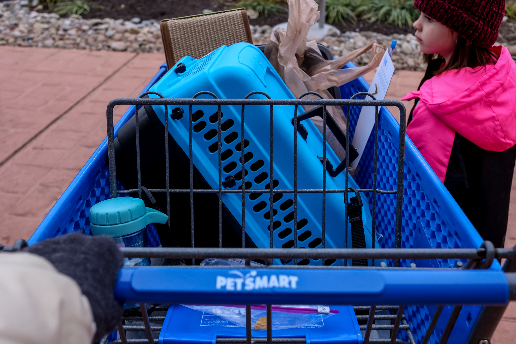 Purchasing supplies from PetSmart in Trexlertown, PA, in anticipation of the adoption of a kitten into the family.