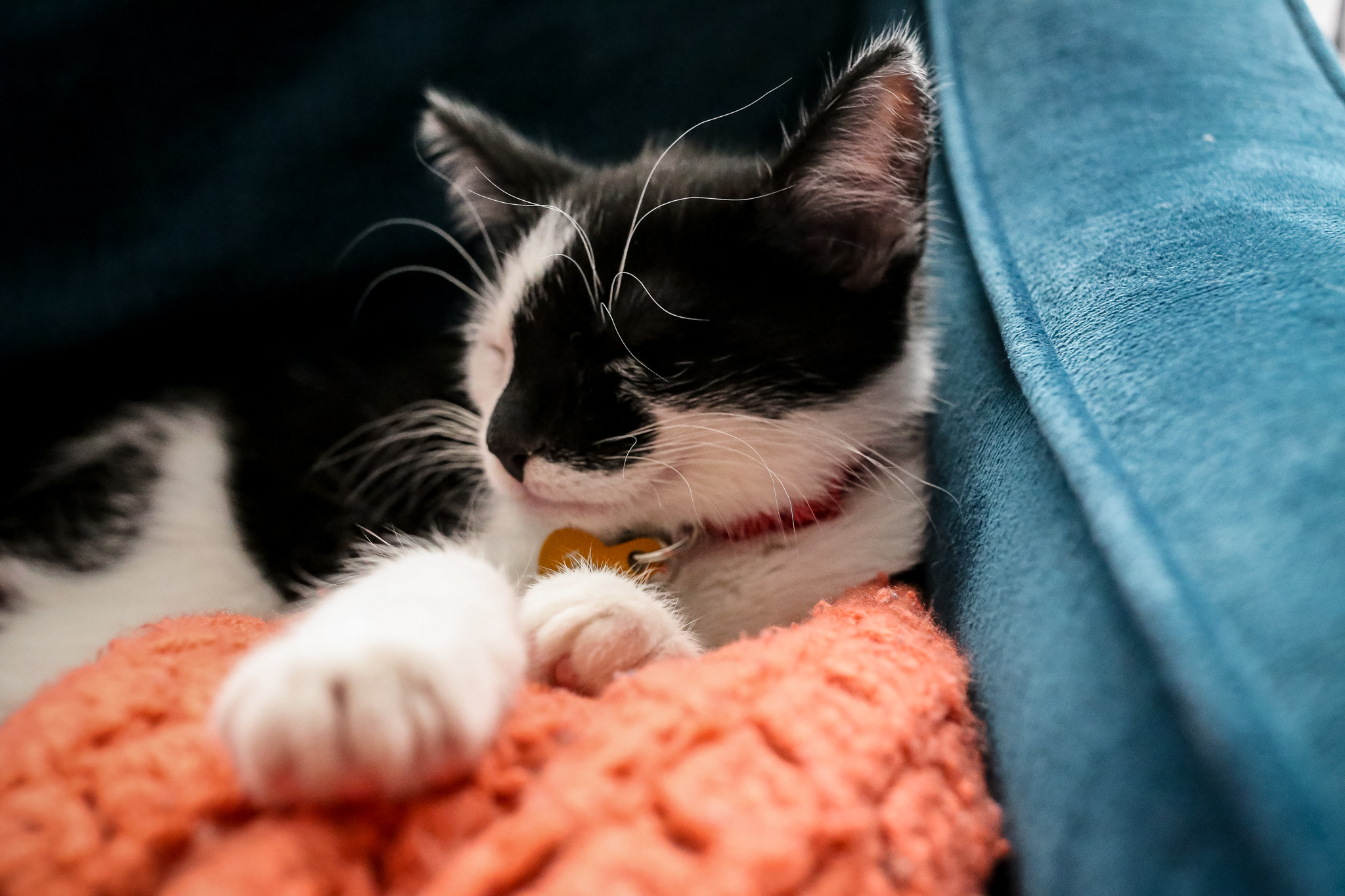 Newly adopted kitten asleep on the couch in his new home in Macungie, PA. Taken during a day in the life photo session by Lehigh Valley photographer Jen Grima.