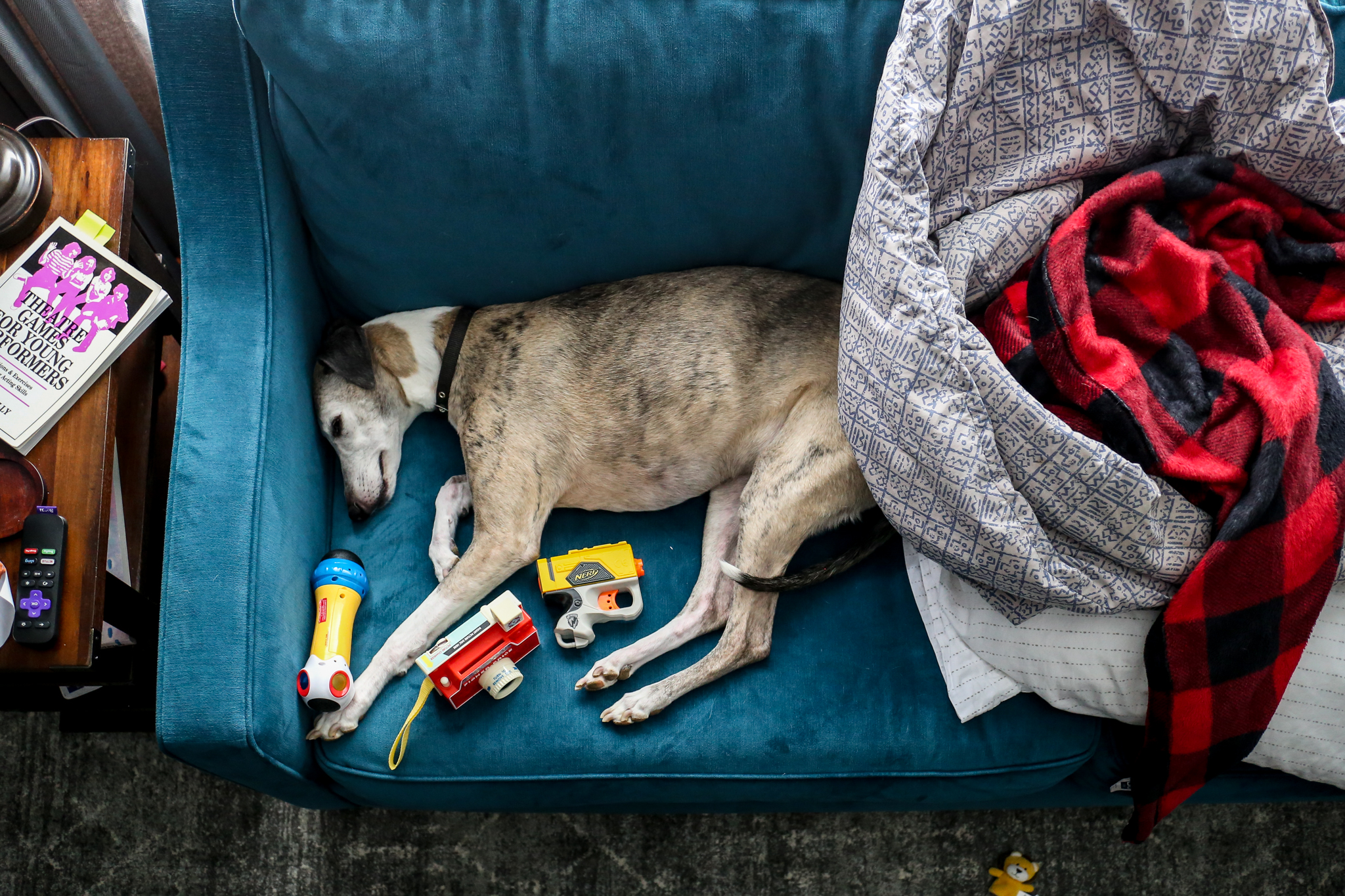 Dog surrounded by kids toys during an at home family photography session in Lehigh Valley, PA.