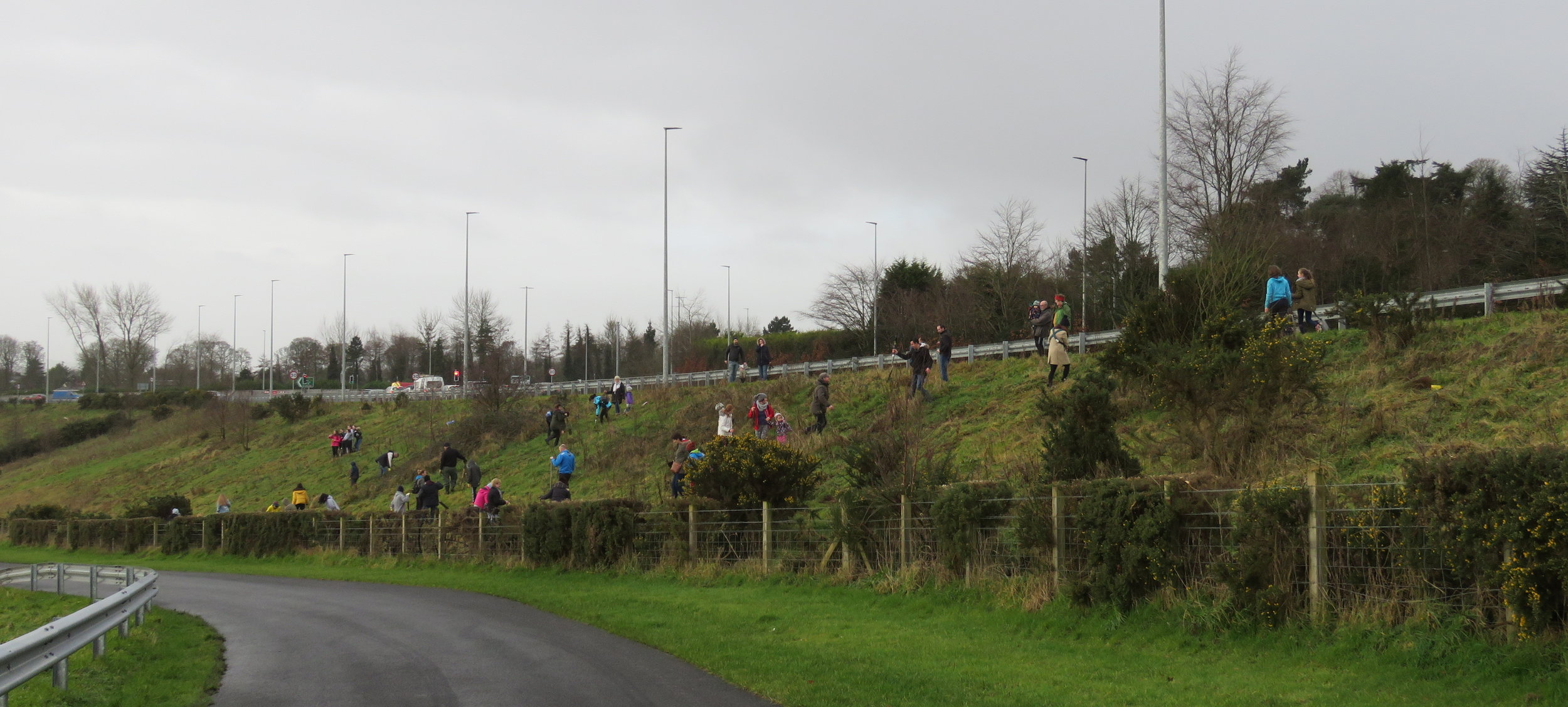 Tree planting on 10th February in Derry with Derry City & Strabane District Council.