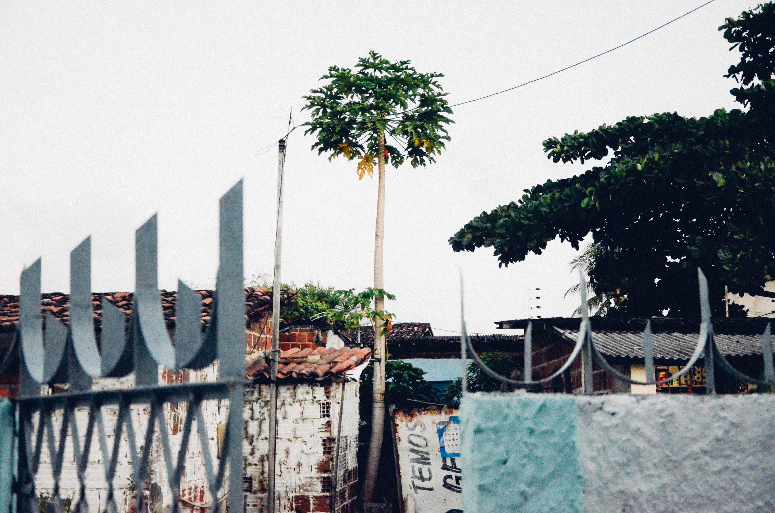 Brazil // Terras do Sem-Fim