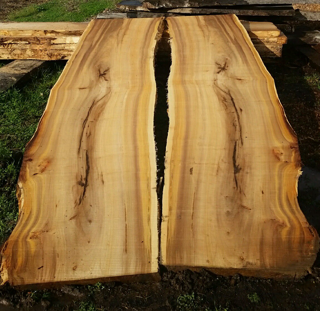 cottonwood_1.png
