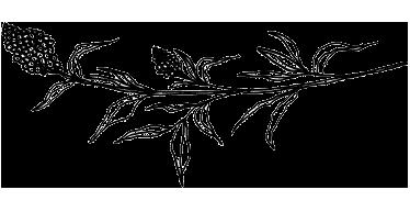 floral-illustration.png