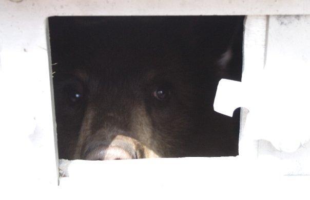 Black bar looking through the trap door