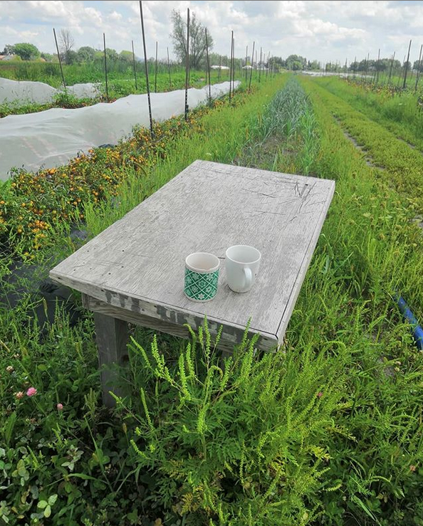 tea in field.PNG