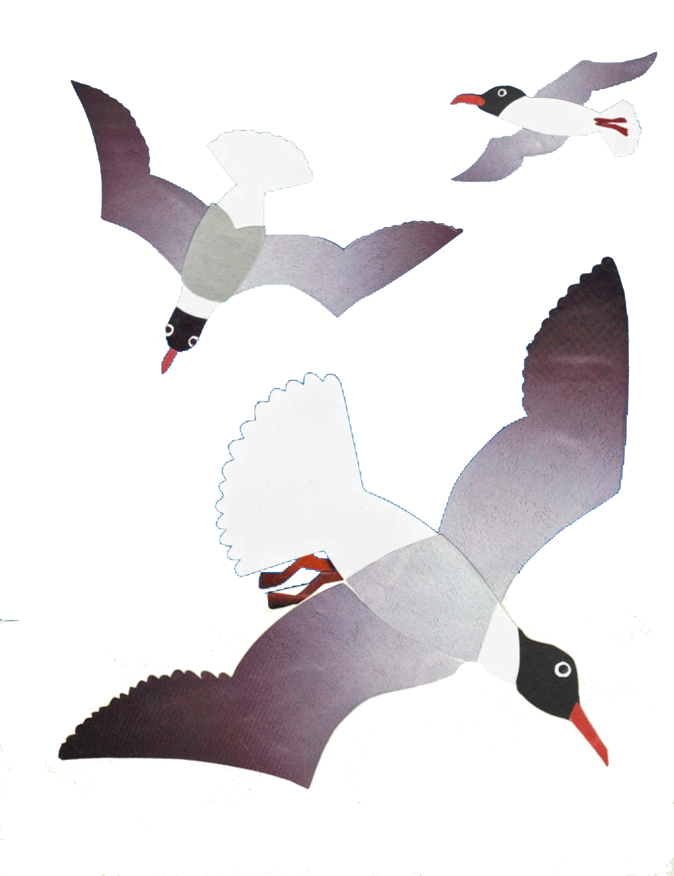Laughing-gull-image-phillis.png