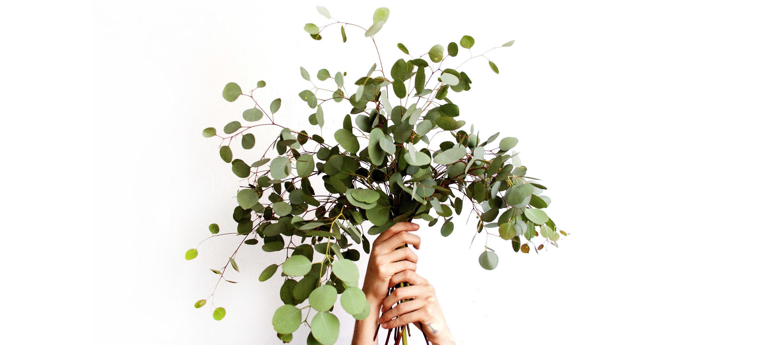 cultivate1.jpg