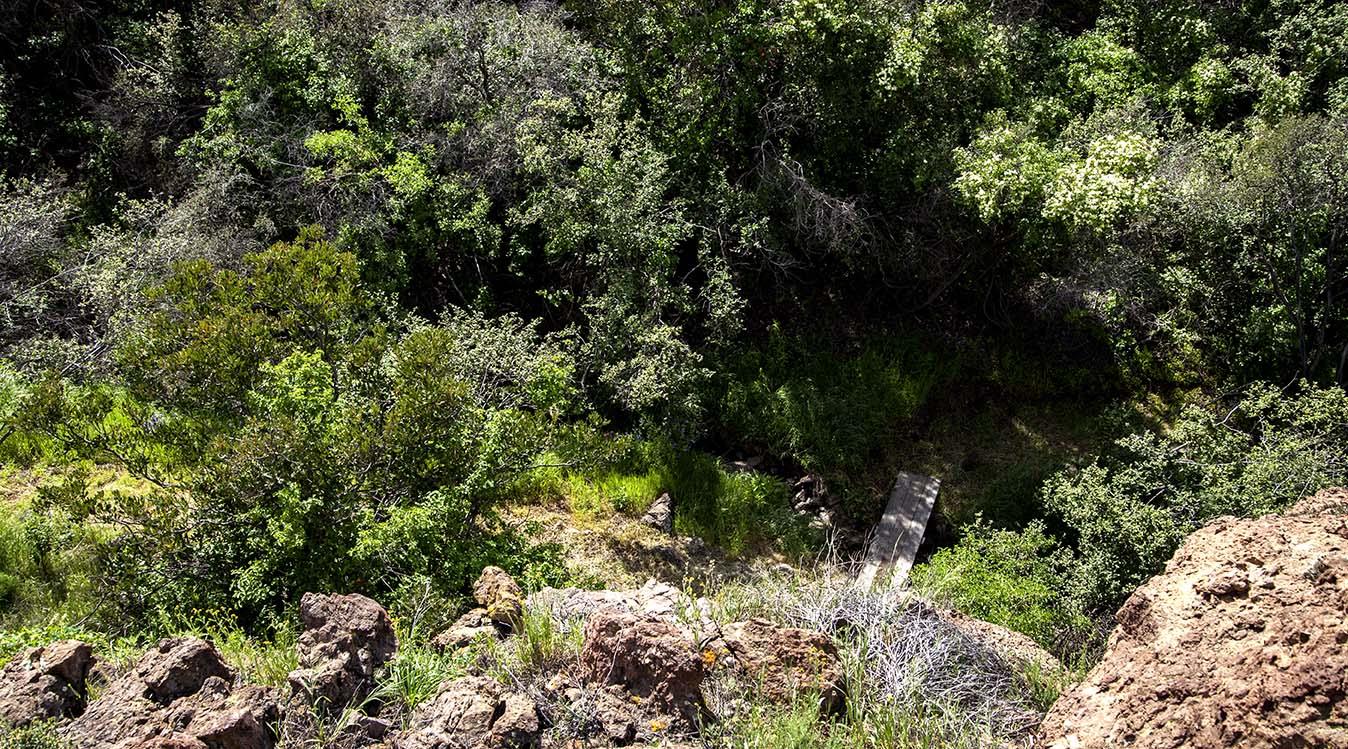 SHR Trail 5a.jpg