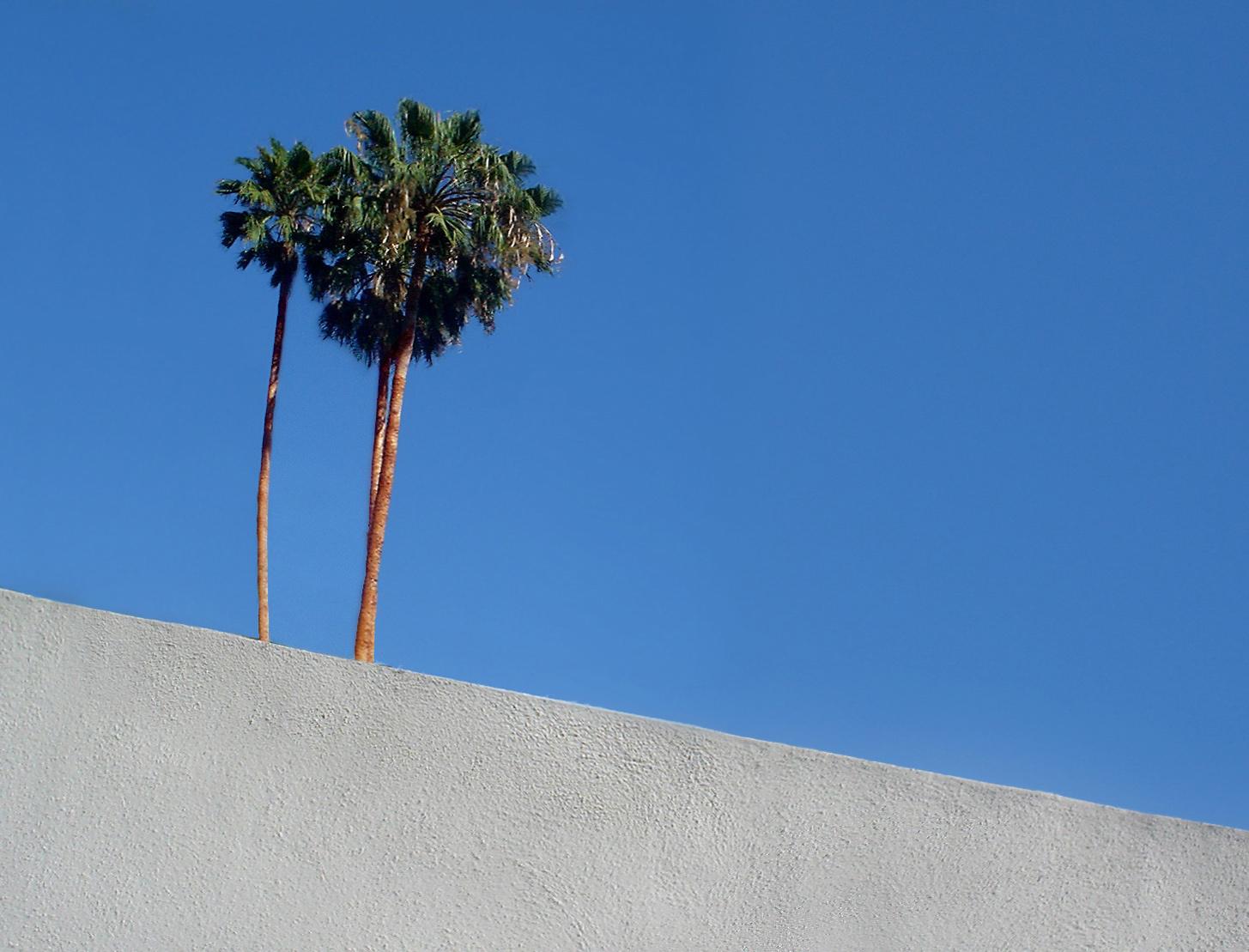 _ Palm Wall 1.jpg