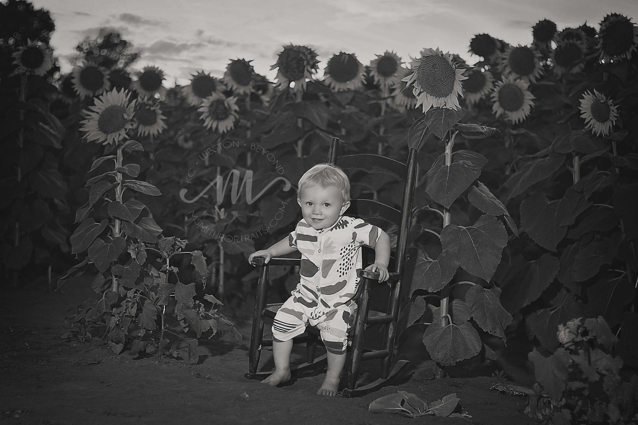 Toddler Boy in Sunflower Field Photo
