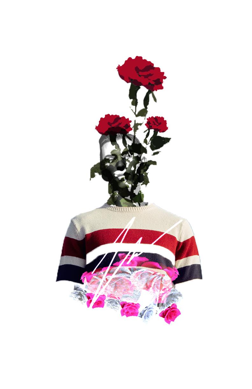 HANDSOME ROSE.jpg