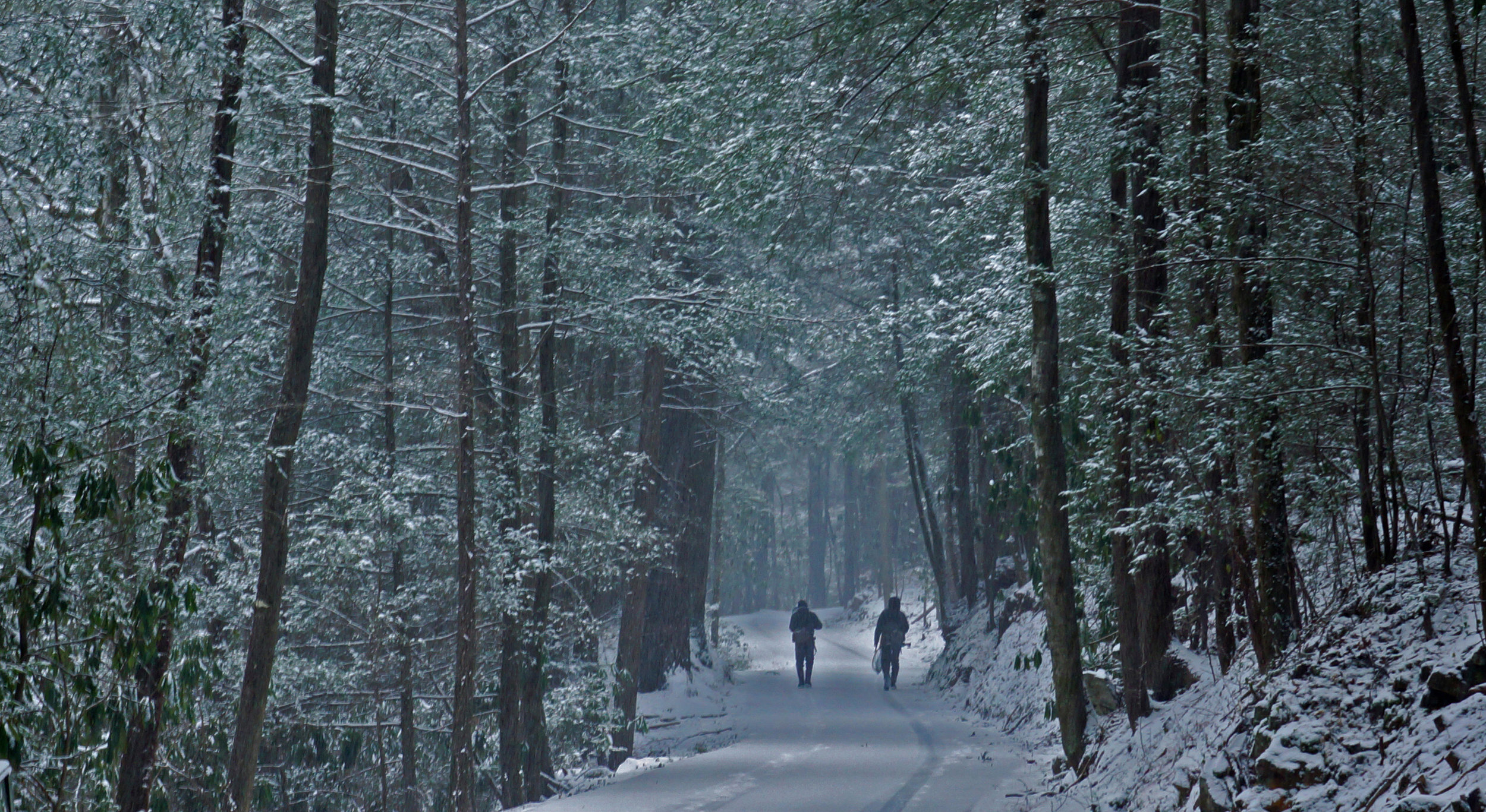 Snowy-walk.jpg