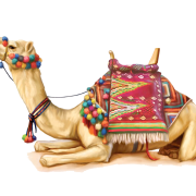 Camel-PNG-2.png