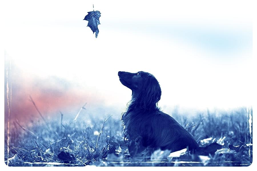dog Leaf.jpg