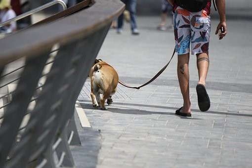 Man walking dog.jpg