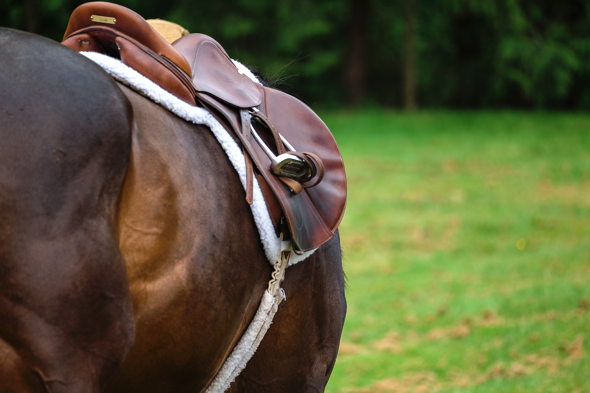 Washington Equine Photography_NMP Images_Detail Shot_Battle Ground WA_Saddle 1.jpg