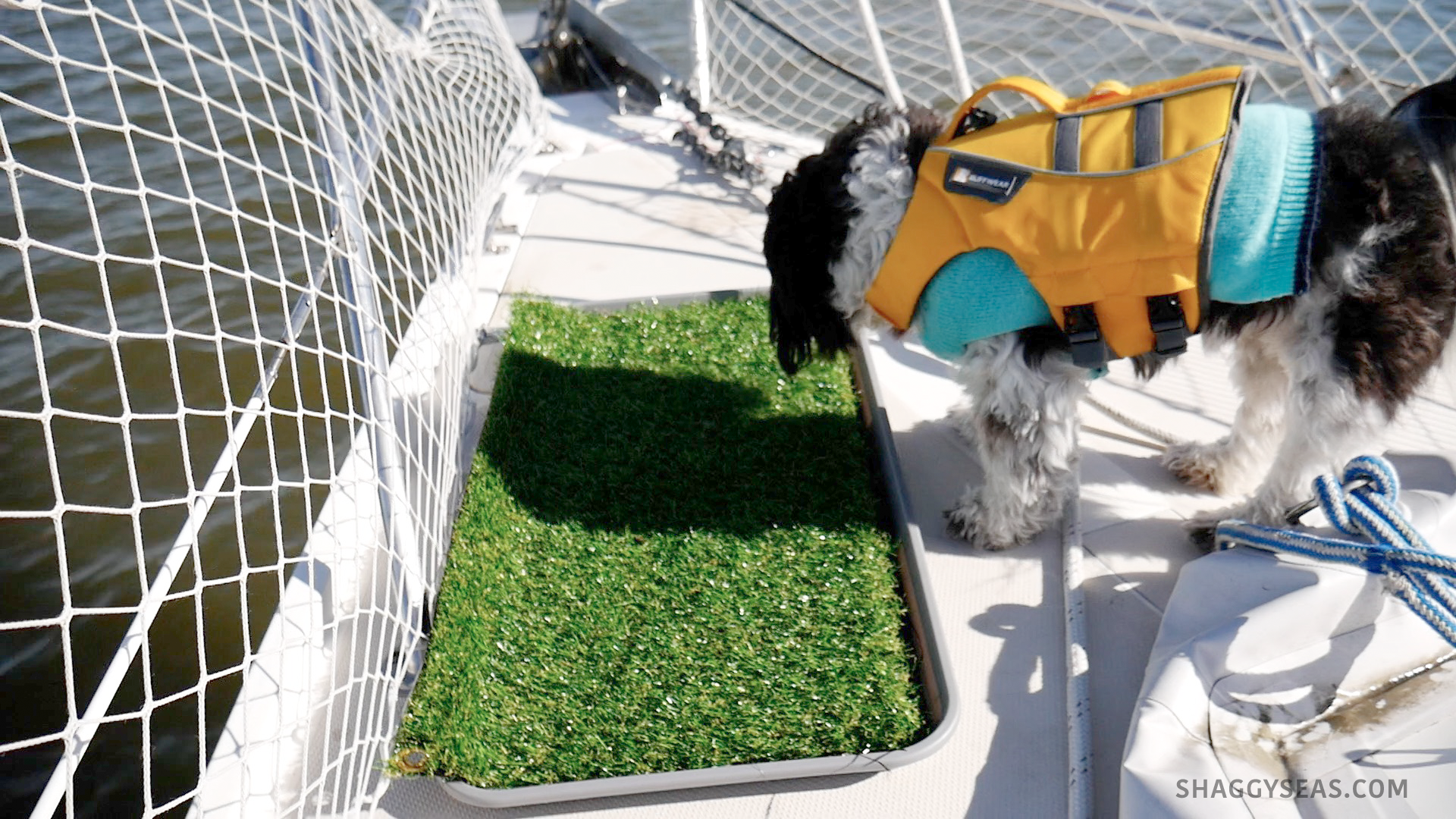 How We Potty Trained our Dogs on a Sailboat