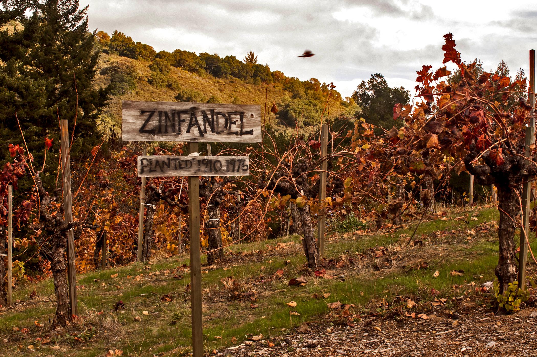 Beautiful fall at the vineyard