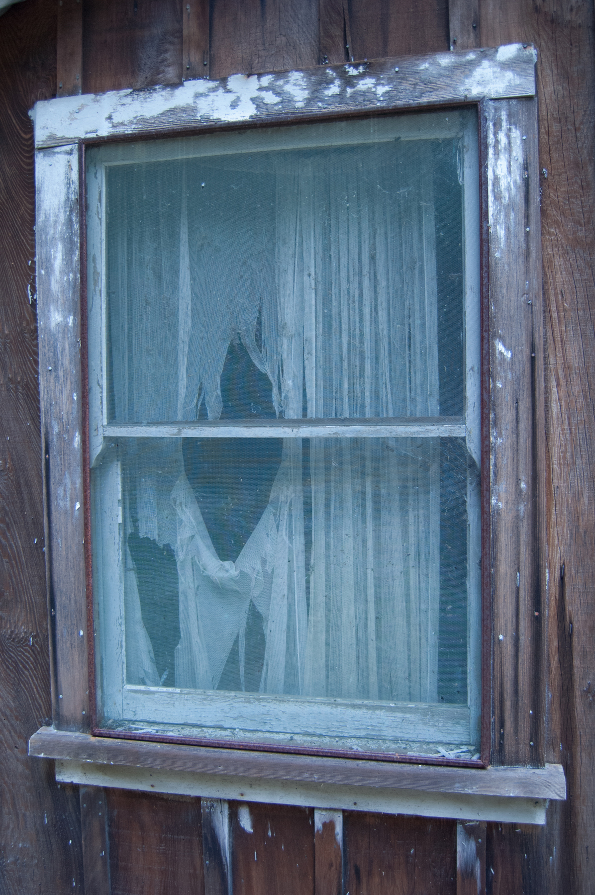 Window with tattered curtain.